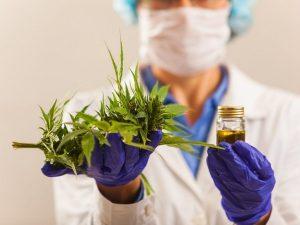 Coronavirus e cannabis